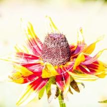 Herfst bloem